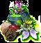 Gyógynövény-terápia1.png