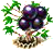 jabuticaba_upgrade_1.png