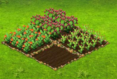 kaktuszfüge.png