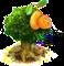 kumquat.png