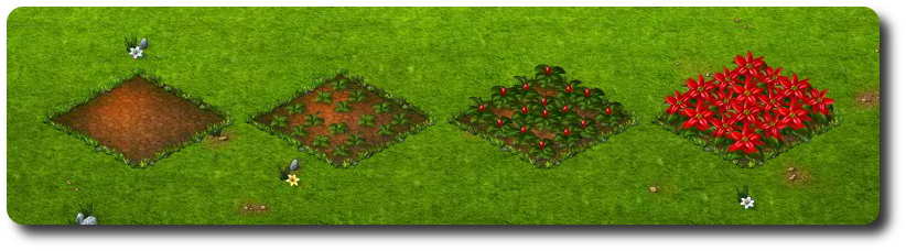 mikulásvirág.png
