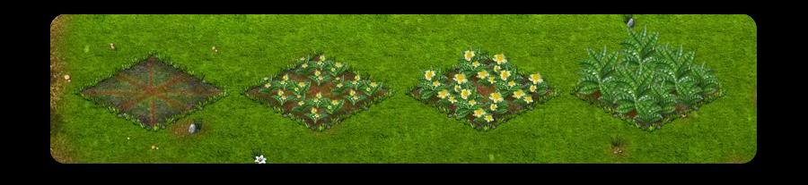 teanövény.png